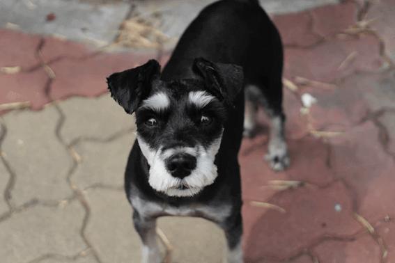犬に教えるコマンドとは?基本の教え方とフレーズを紹介