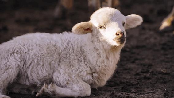 羊毛フェルト作家になるには?収入と合わせてみてみよう