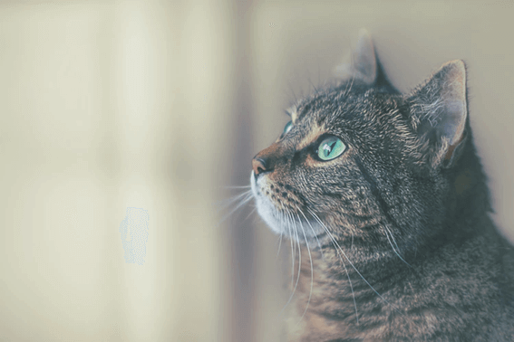 人懐っこい猫と一緒に生活しよう!