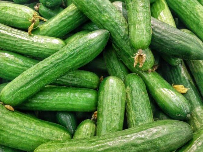 ゴーヤのベランダ栽培は可能︖植え付けから育て方を確認してみよう