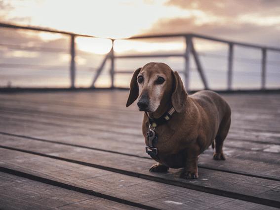 犬の問題行動の原因と飼い主の意識改革