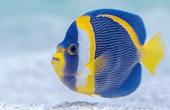 ルノルマンカードの「魚」が表す意味とは?