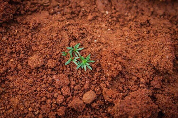 土の処分はどうする︖再生方法とともに紹介︕