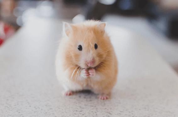 ルノルマンカードの「ネズミ」が表す意味とは?