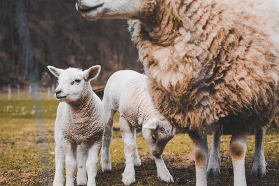 羊毛フェルト講師になるには?なり方や仕事内容って?