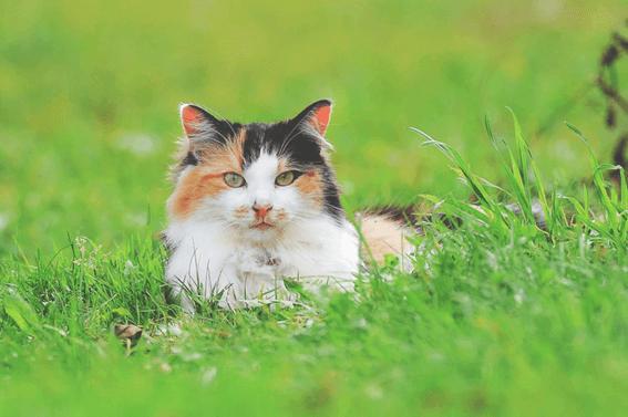 猫の育て方をしっかり理解しよう!