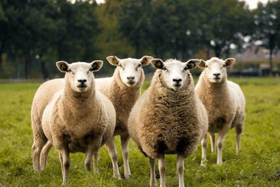 羊毛フェルトの作業に必要なものをそろえよう