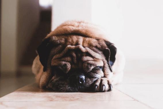 犬がトリミングで暴れる理由は?どうやって対処したらいい?
