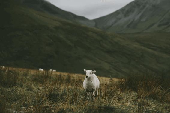 羊毛フェルトの表面をきれいに仕上げよう