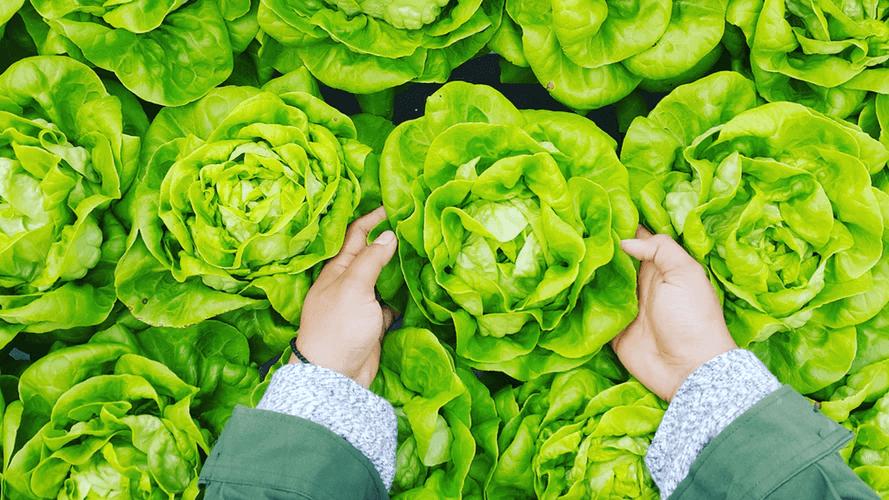プランターで手軽に作れる秋冬野菜って?種類や特徴をみてみよう