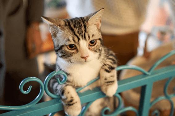 猫にとってケージが必要な理由は?正しい使い方を押さえよう