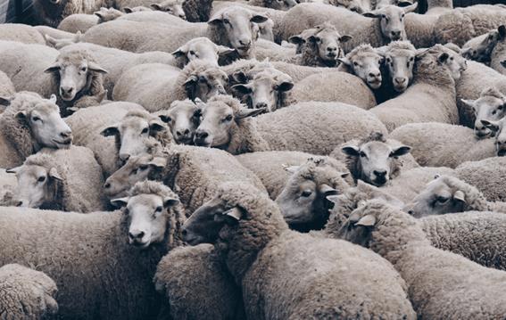 羊毛フェルトの表面をきれいに仕上げるコツ