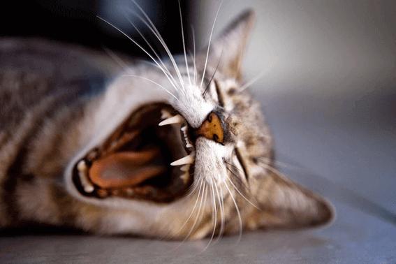 猫の餌入れはどうやって選ぶ?餌台の高さをチェック!