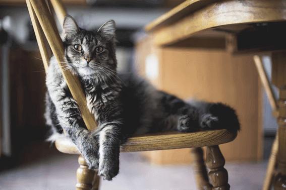 猫の寝る位置から気持ちを理解してあげよう!