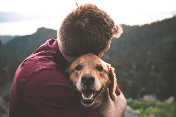 犬の散髪はどうしたらいい?自宅でカットすることも可能なの?