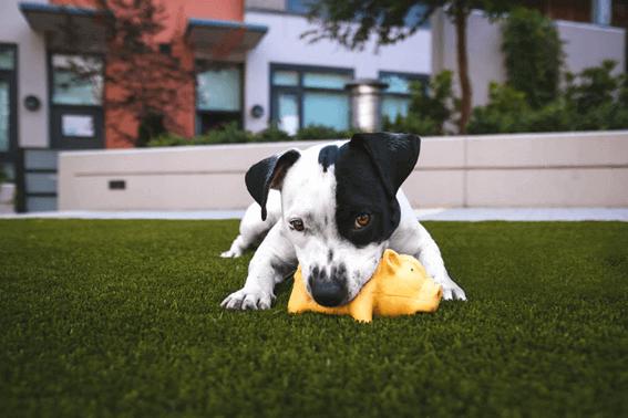 犬が甘噛みする理由とは?対策のしかたをレクチャー
