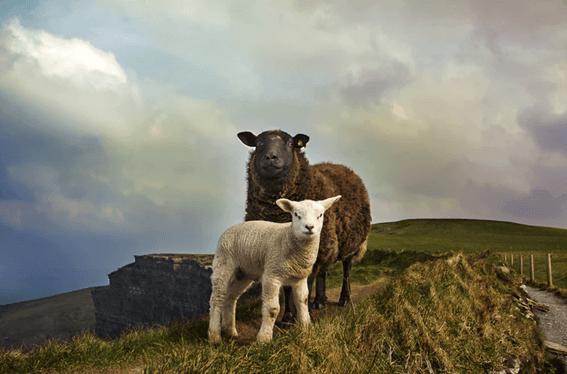 羊毛フェルトは正しく保管しよう!