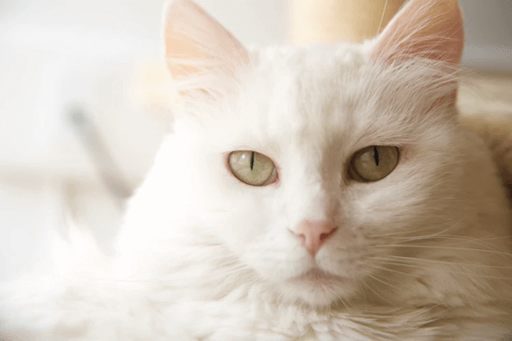 猫のくしゃみや鼻水には注意しよう!