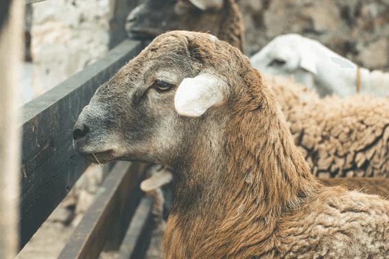 羊毛フェルト作家になるにはまずはスキルをしっかり身につけよう