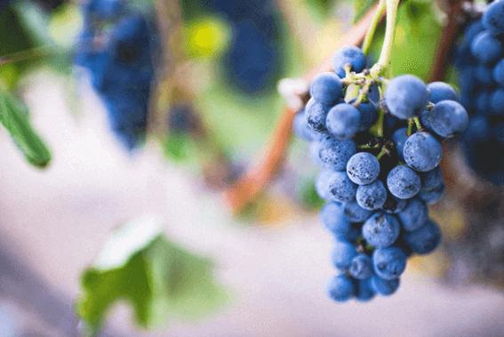 おいしく飲むためのワインの保存方法とは?
