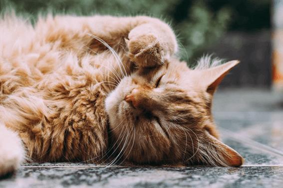 猫がブラッシングを嫌がるときはまずは理由を考えて!