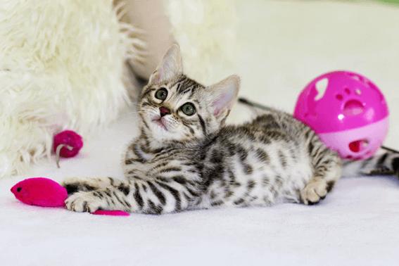 猫とはどう遊んだらいいの?遊び方のポイントや注意点とは?