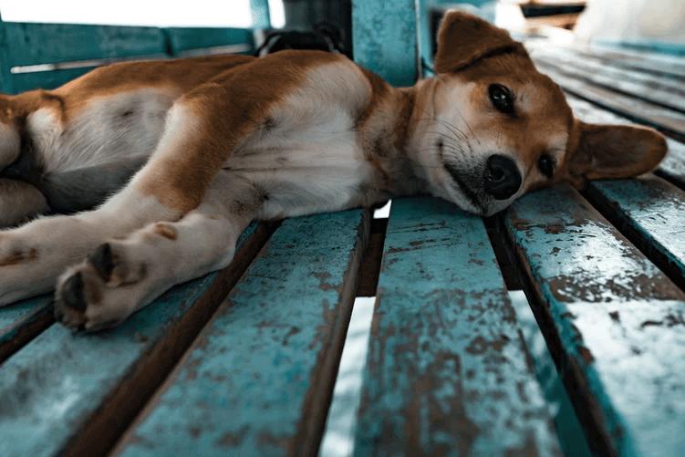 犬のストレス解消法を実践しよう
