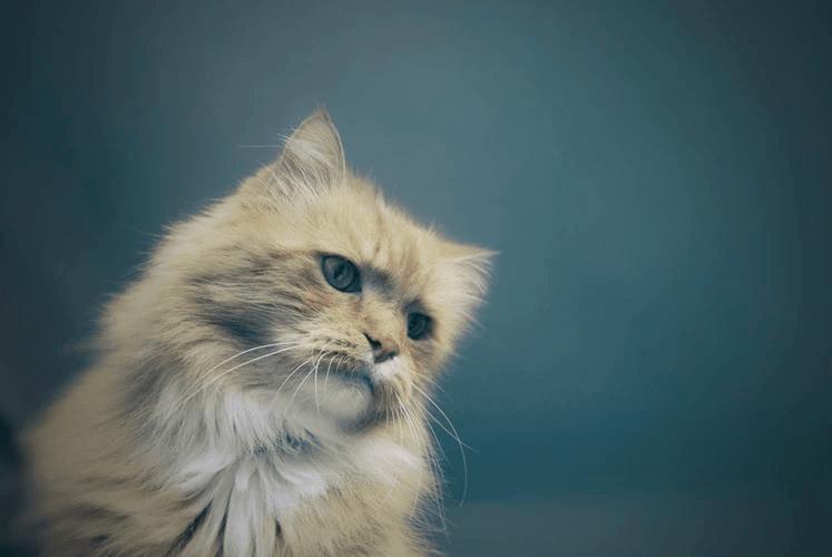 猫の過剰グルーミングを防ごう!