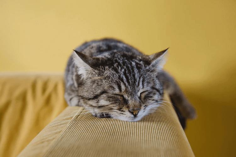 猫の分離不安症って?その原因と対策について解説!