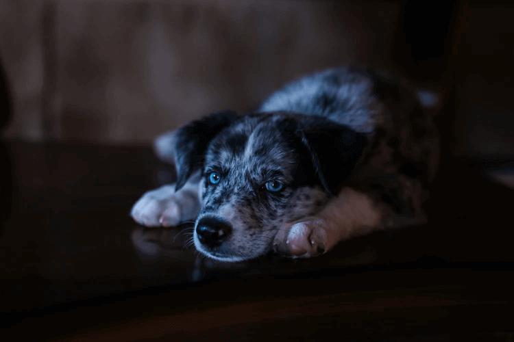 犬がブルブル震えるときは理由をしっかり見極めて!
