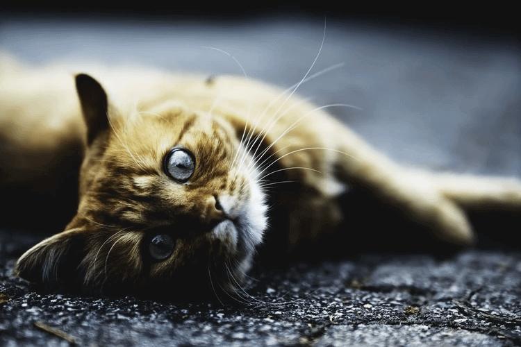 猫の過剰グルーミングって?過剰グルーミングの対処法は?