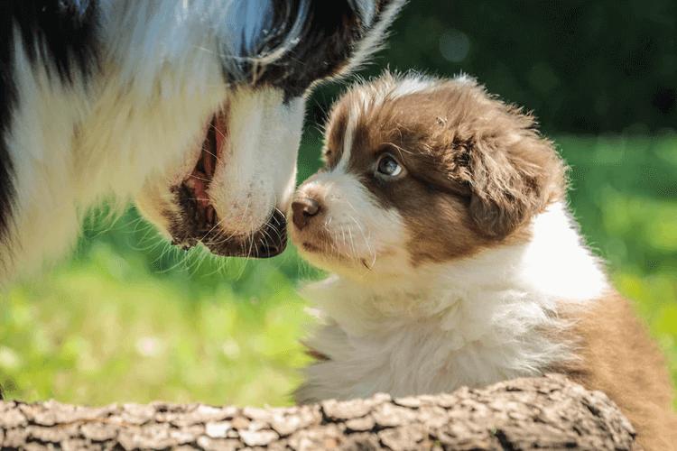 犬が鼻を舐める意味とは?理由と見極め方は?