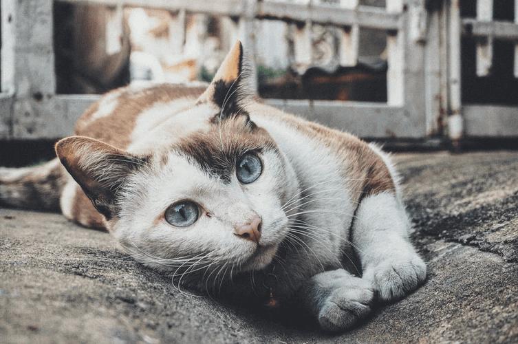 猫の気持ちや感情による鳴き声の変化はどうなっている?