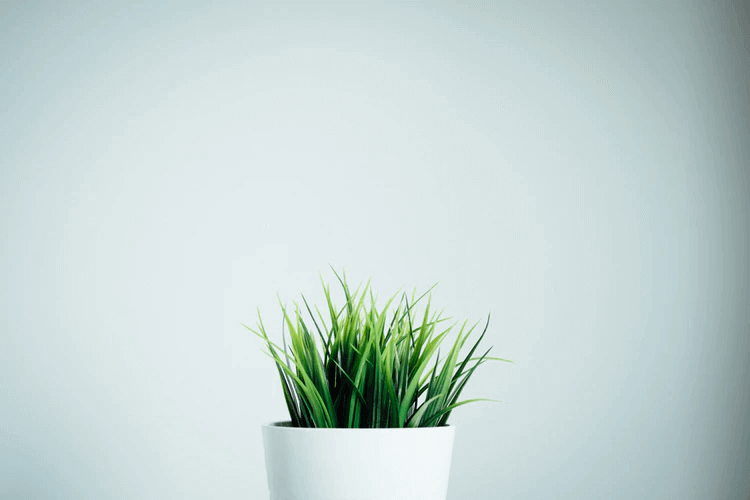 水耕栽培をするために必要な道具にはどんなものがある?
