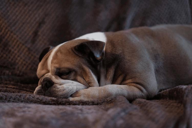 犬の分離不安症とは?症状の原因や対策について解説!