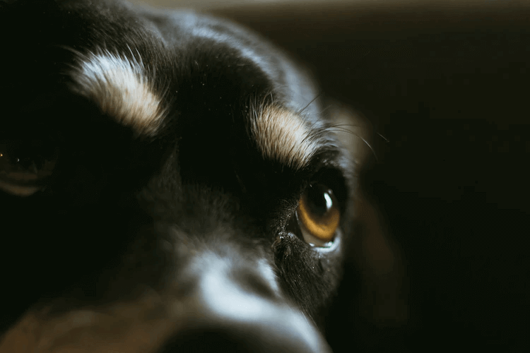 犬が目をそらすときは無理に目を合わせないようにしよう