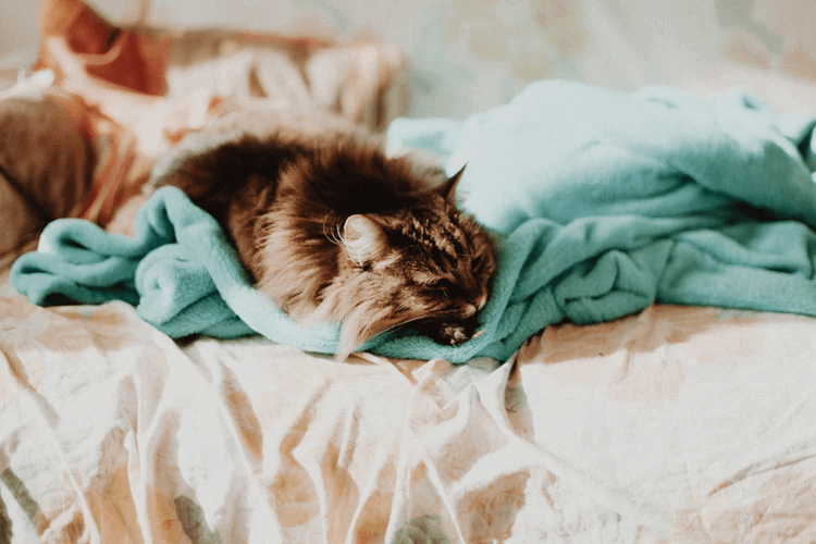 猫の分離不安症には適切な対策をとろう