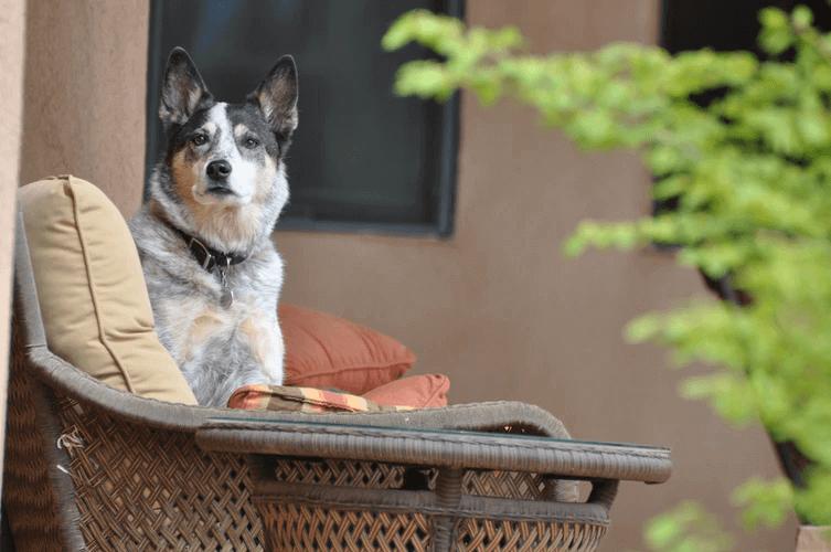 犬がブルブル震える理由とは?原因と対処法を解説