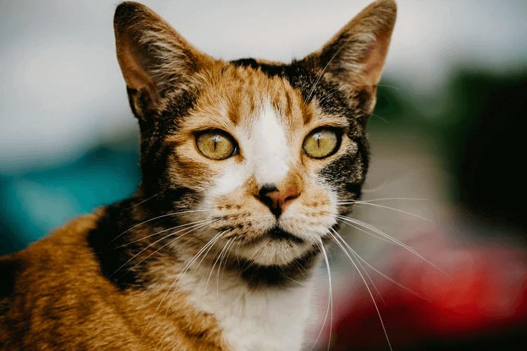 猫が留守番で感じるストレスって?対策を詳しく紹介!