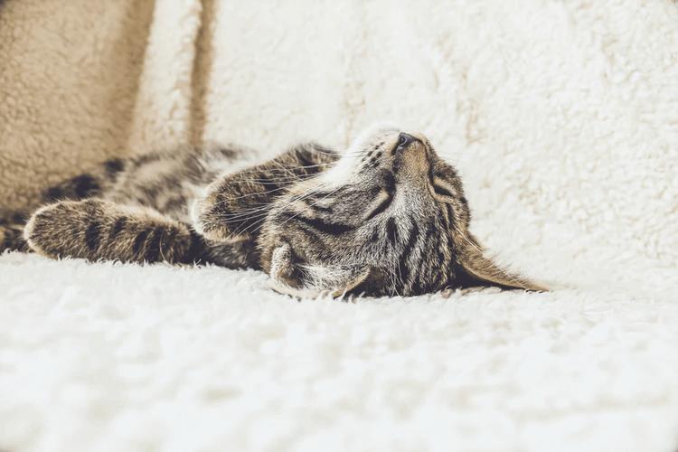 猫のストレスサインって?ストレスの原因をしっかり見極めよう