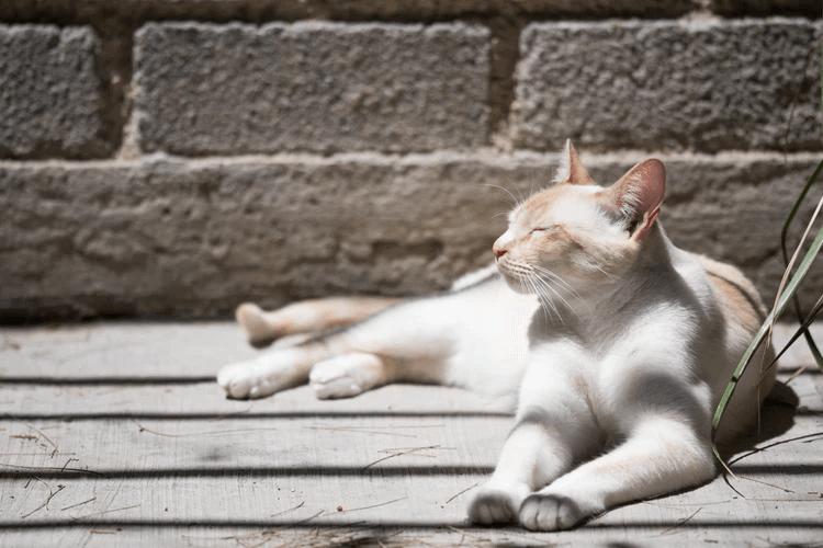 猫の気持ちを鳴き声から読み解こう