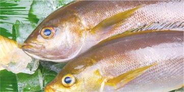 魚資格講座