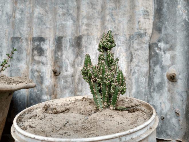 盆栽の魅力を理解して楽しんでみよう