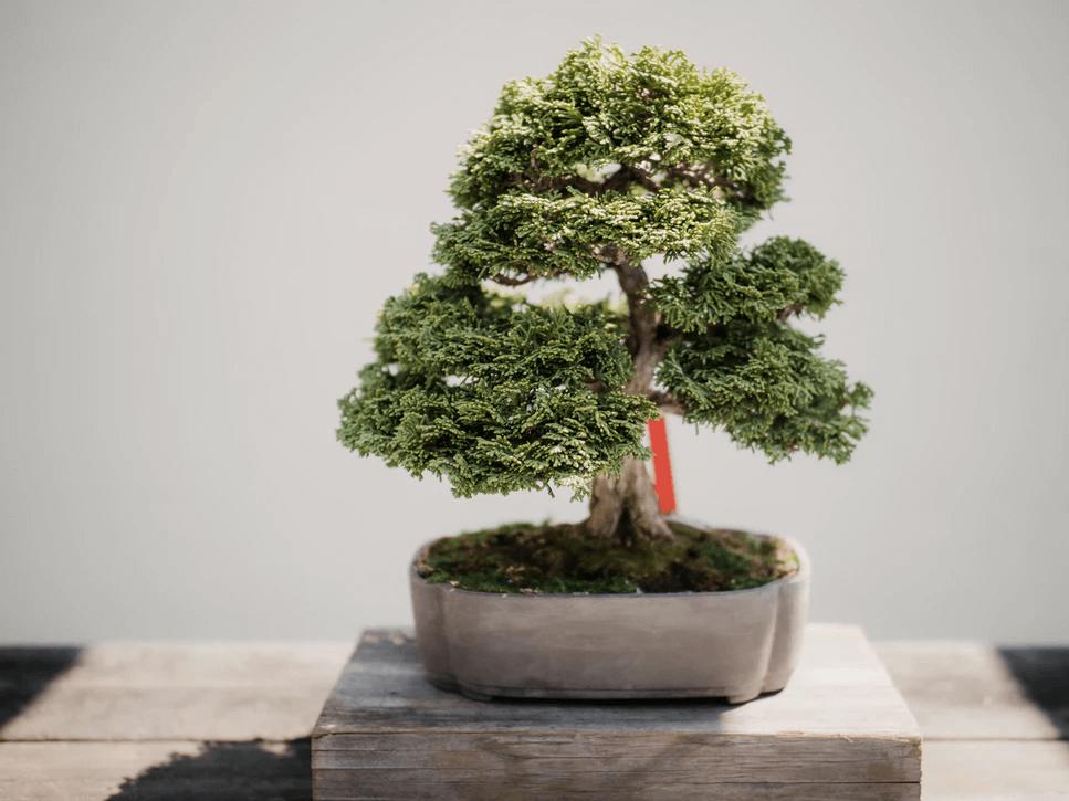 盆栽・苔玉の勉強はどうすればいい?資格取得のメリットは?