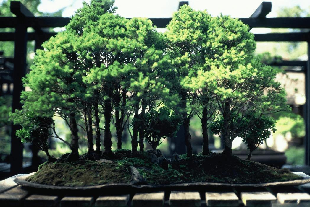 盆栽の魅力とは?盆栽の楽しみ方や見方って?