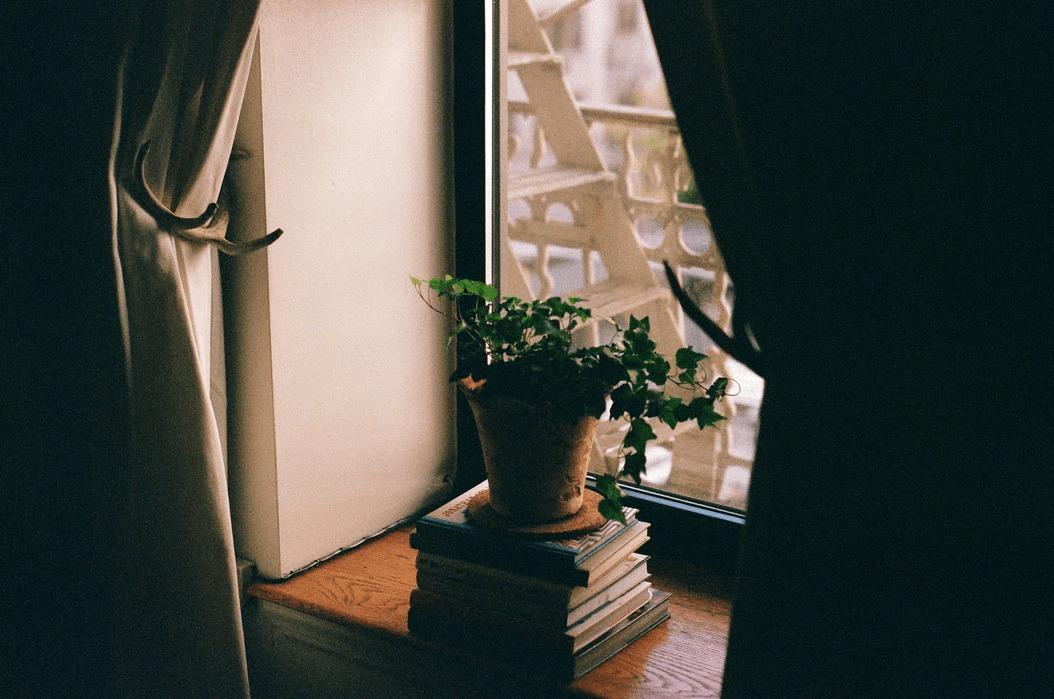 盆栽の歴史って?海外の反応や最近の人気ぶりを紹介